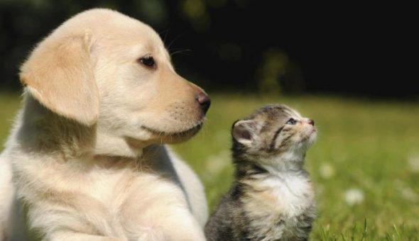 PETA propone cambiar dichos populares para frenar violencia