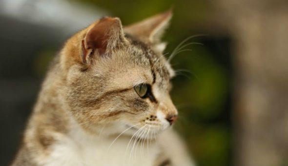gato dueños