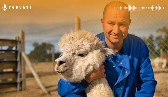 Alejandro Rojas Covid Alpacas Card Web
